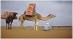 الدورة ال 29 من سلطان ماراطون الرمال بجنوب المغرب