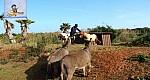 جديد حديقة سندباد مزرعة تربوية لنزور في  عين  المكان